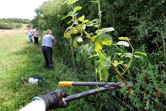 Hacking At The Brambles