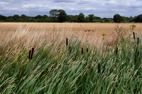 Caching And Bullrushes