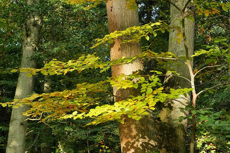 More Lovely Trees