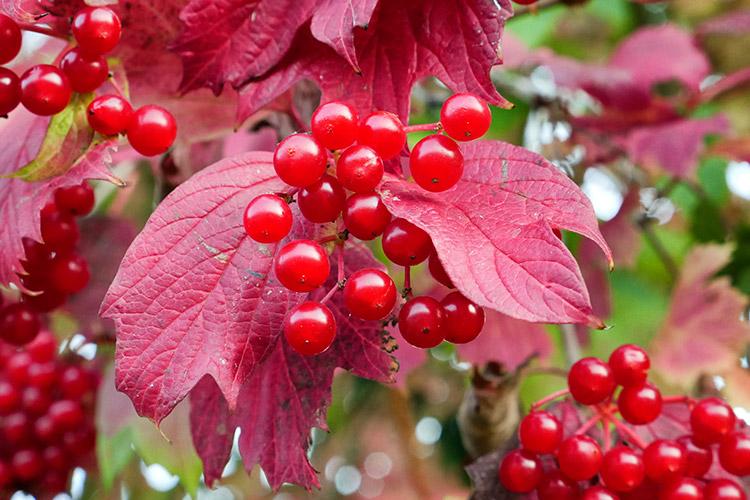 Berries On The Walk