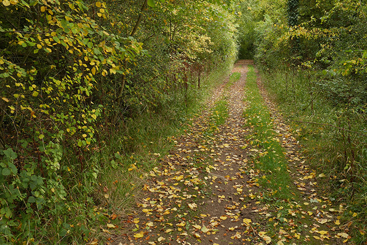 Poles Lane Autumn