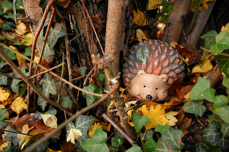 Miss Tiggywinkle lurks in a bush
