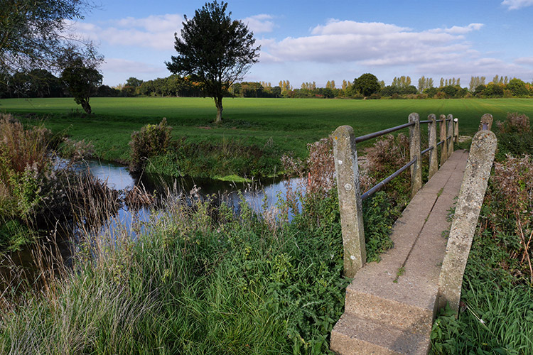 Bridging The River Brain