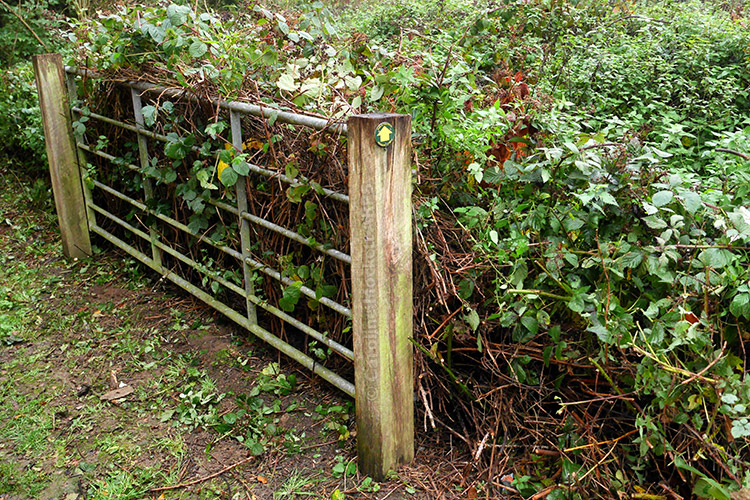 Gate To The Thicket