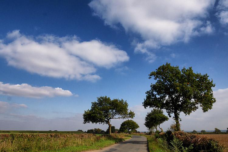 Walking The Roads