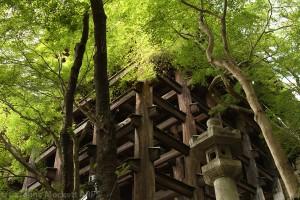 Kiyomizu-dera Hon-Do, Kyoto