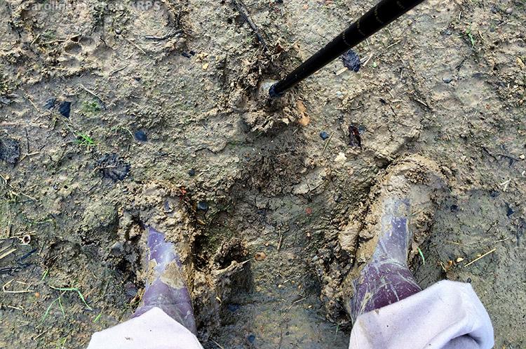 Mud! Mud! Mud!