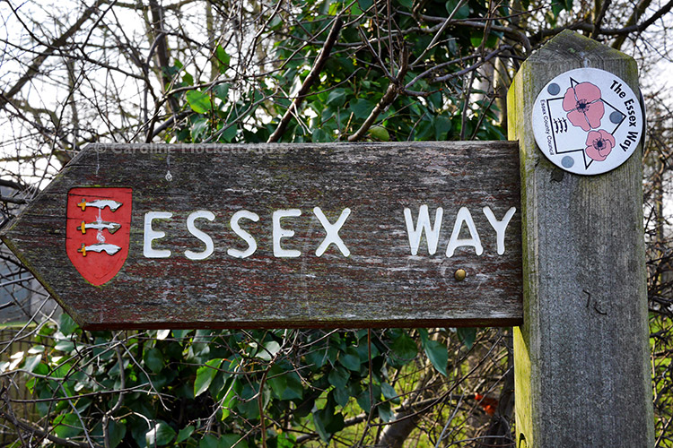 Which Way For The Essex Way?