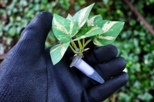 Leafy Camo