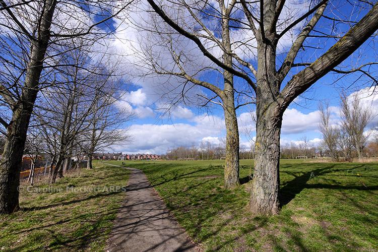 Iris Brickfield Park
