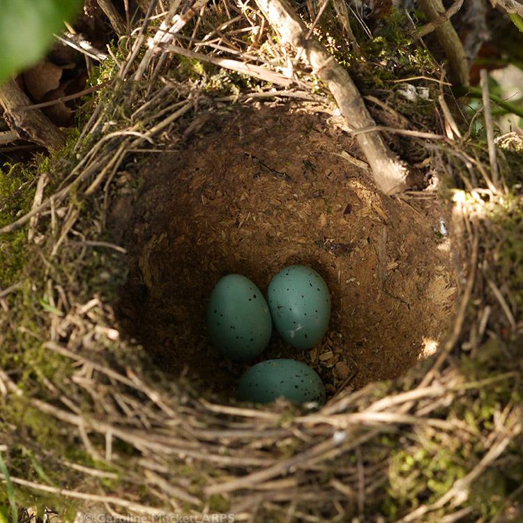 Empty Nest :-(