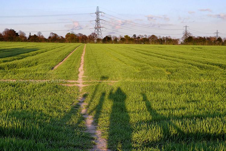 Around The Fields