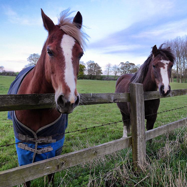 Horsey Friends