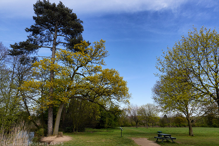 Cheshunt Park Scenery