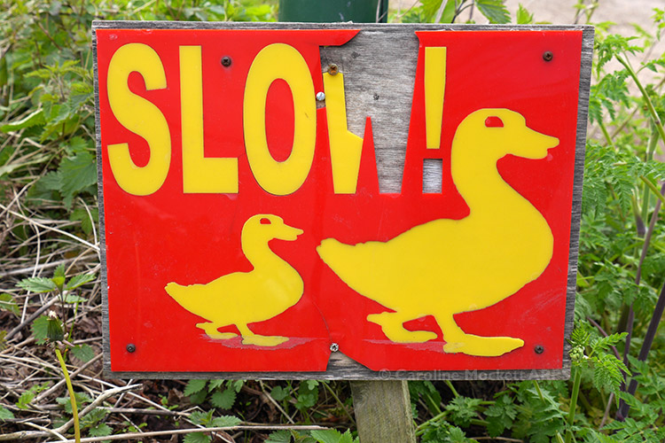 Slow Ducks?