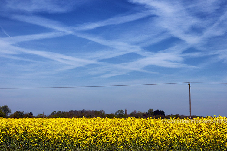 Blue Sky, Yellow Fields