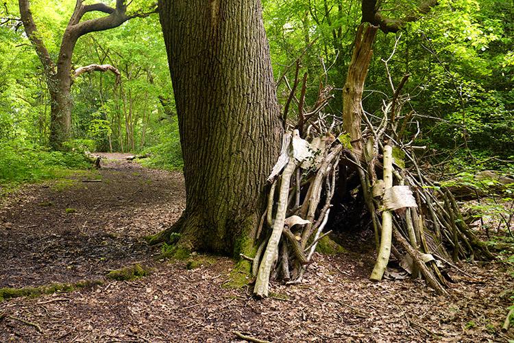 Cool Woodland Bivouac
