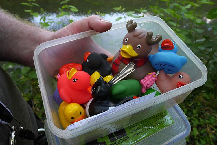 Ducks Ducks Ducks!