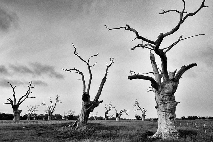 Moody Mundon Oaks