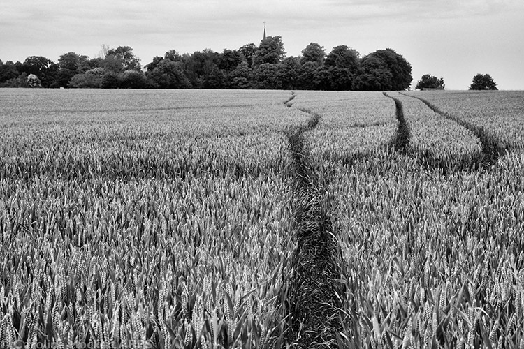 Tracks In The Crops