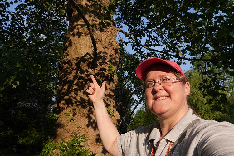 Virtual Up A Tree