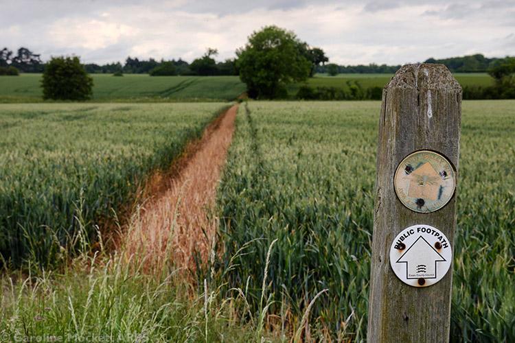 Wide Open Pathways