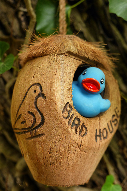 LQ Finds The Perfect Birdhouse!