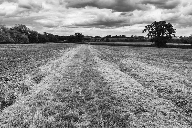 Wide Flat Path