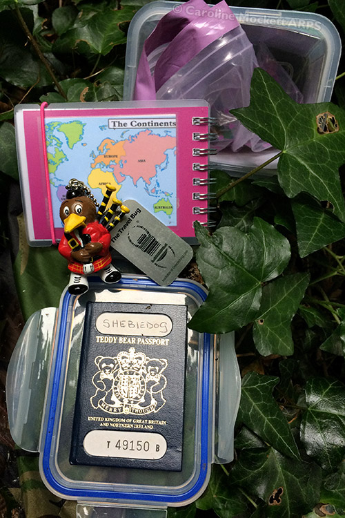 Passport For A Bear
