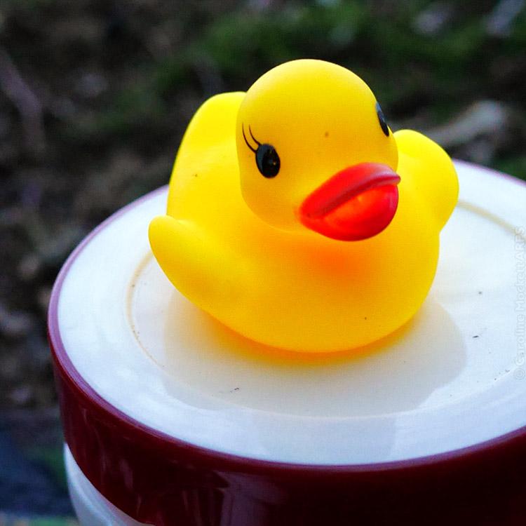 Brouwer Duck